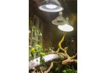 Reptile Lighting Consultation